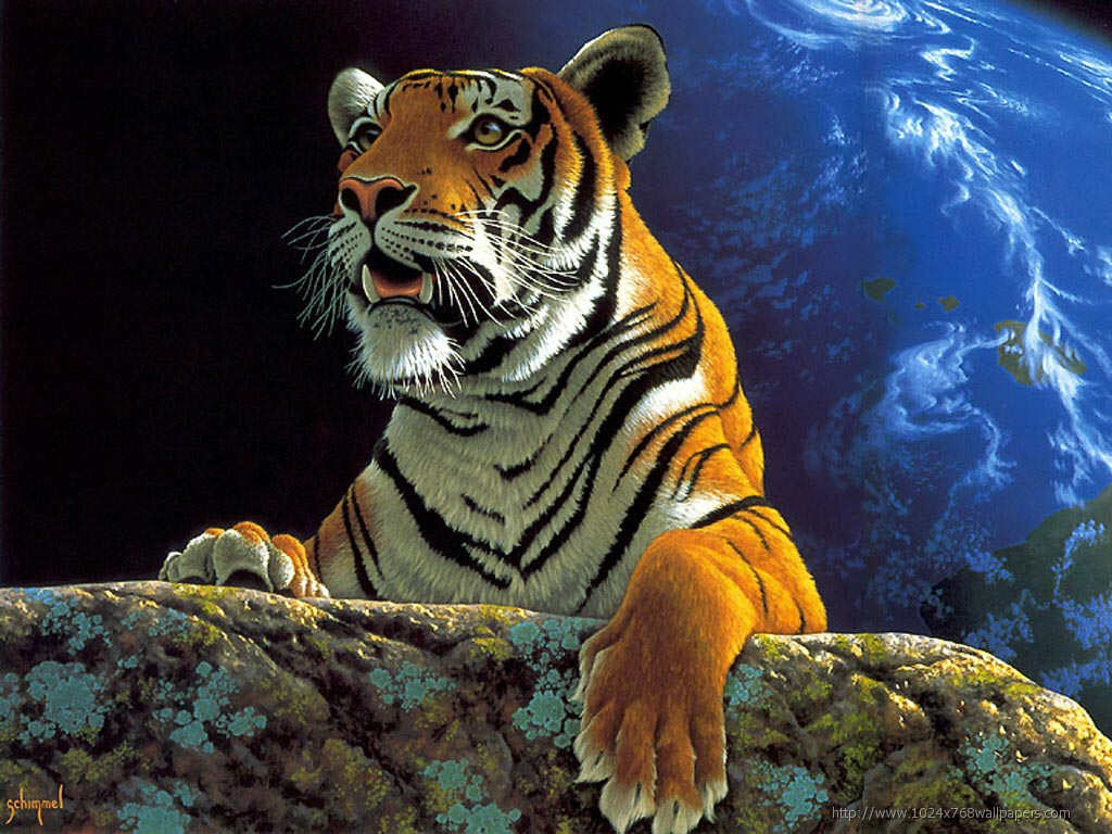 amazing funny picture: best hd tiger high regulation pictures