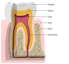 Dentist Silver Spring MD