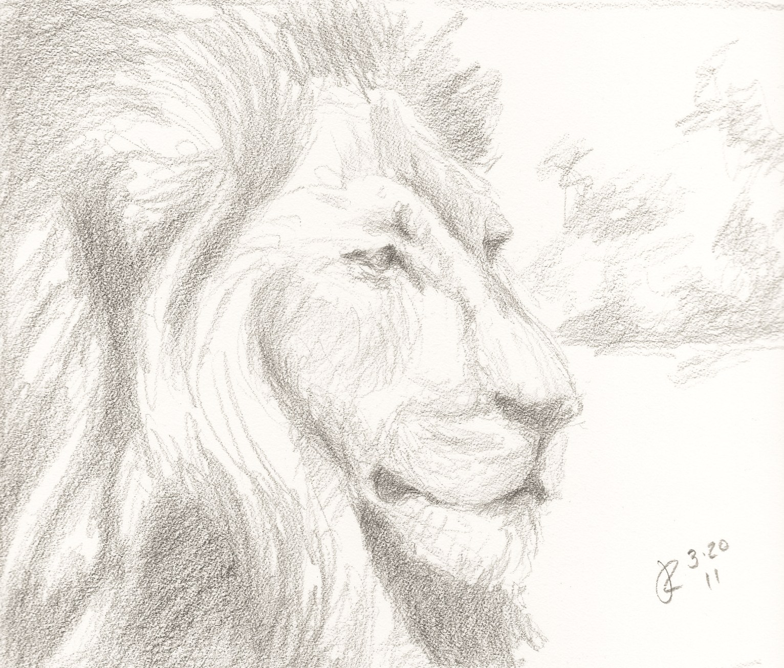Lion which is mighty among beasts and does not turn away from anypencil drawing of a