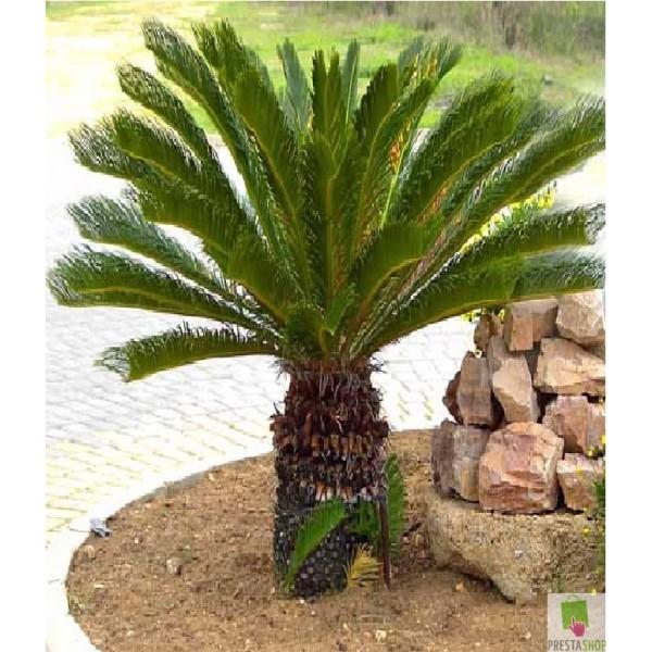 Plantas de lupis for Plantas de interior precios