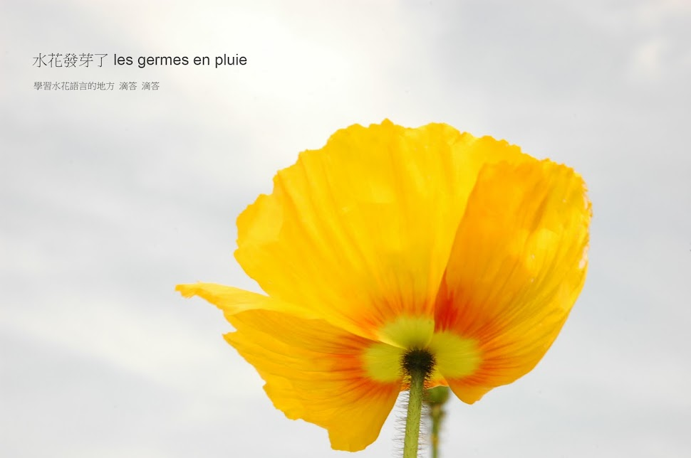 水花發芽了 les germes en pluie