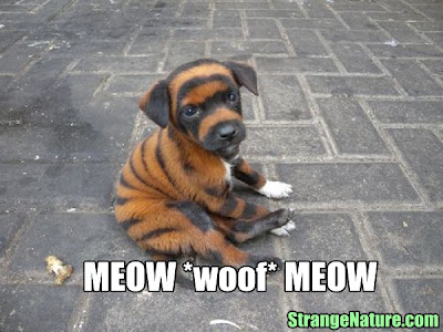 funny exotic cats 6