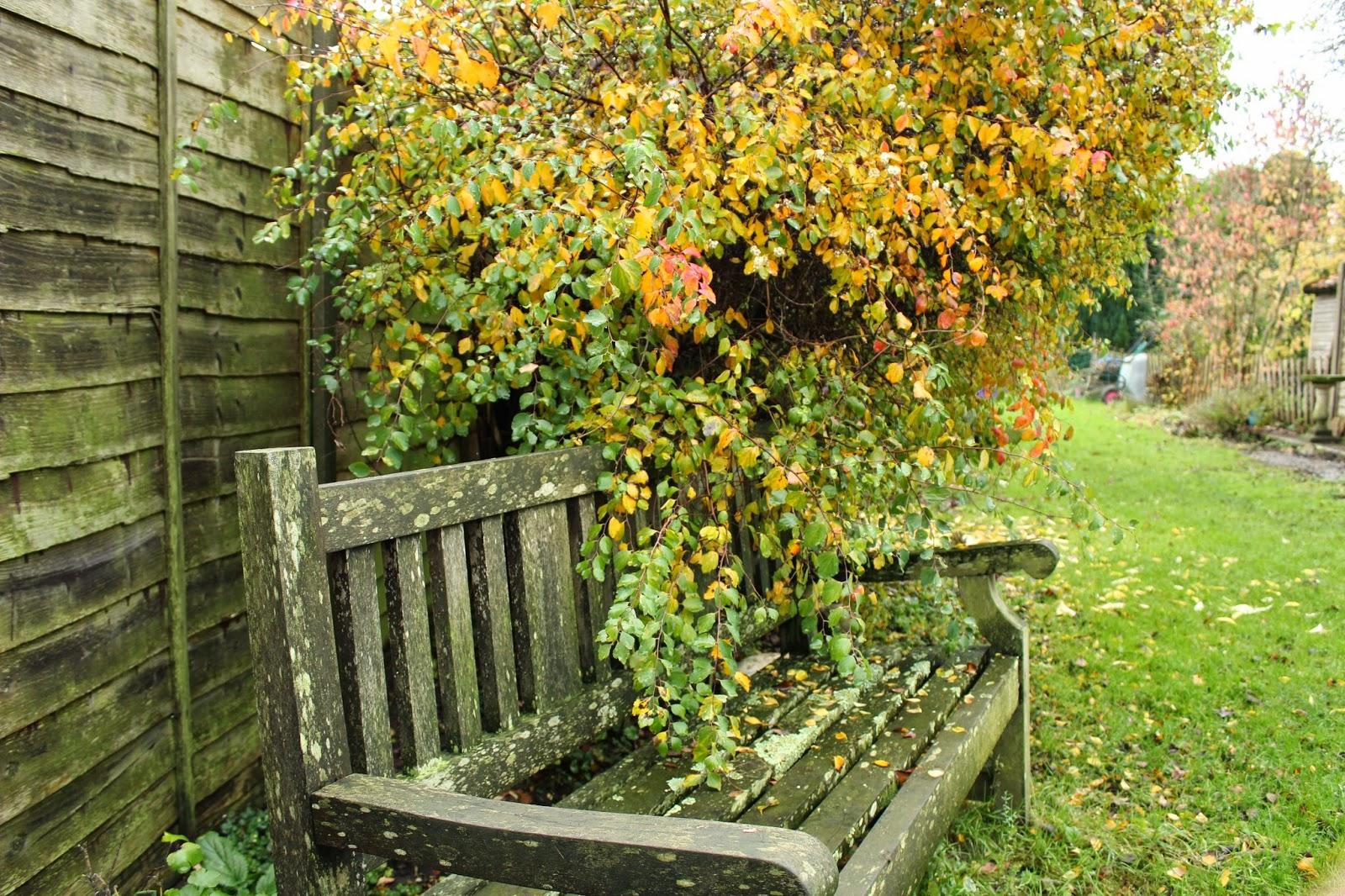 Autumn Garden // 76sunflowers