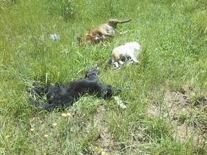 Mais de cem cães e três gatos foram encontrados mortos na Serra (Foto: Divulgação/Polícia Civil)