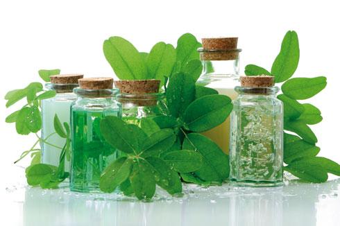 P nicilline les plantes peuvent elles tuer les microbes for Recherche sur les plantes