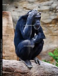 Macaco Não...