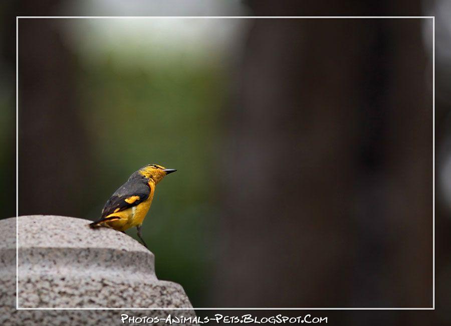 http://4.bp.blogspot.com/-GRLPpFxQqHg/Tt-J0I2eOwI/AAAAAAAAChw/u17ofqUKRf0/s1600/birds.jpg