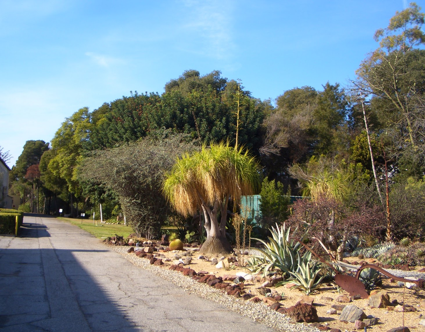 THOUGHTS ON ARCHITECTURE AND URBANISM: Succulents and cactus gardens