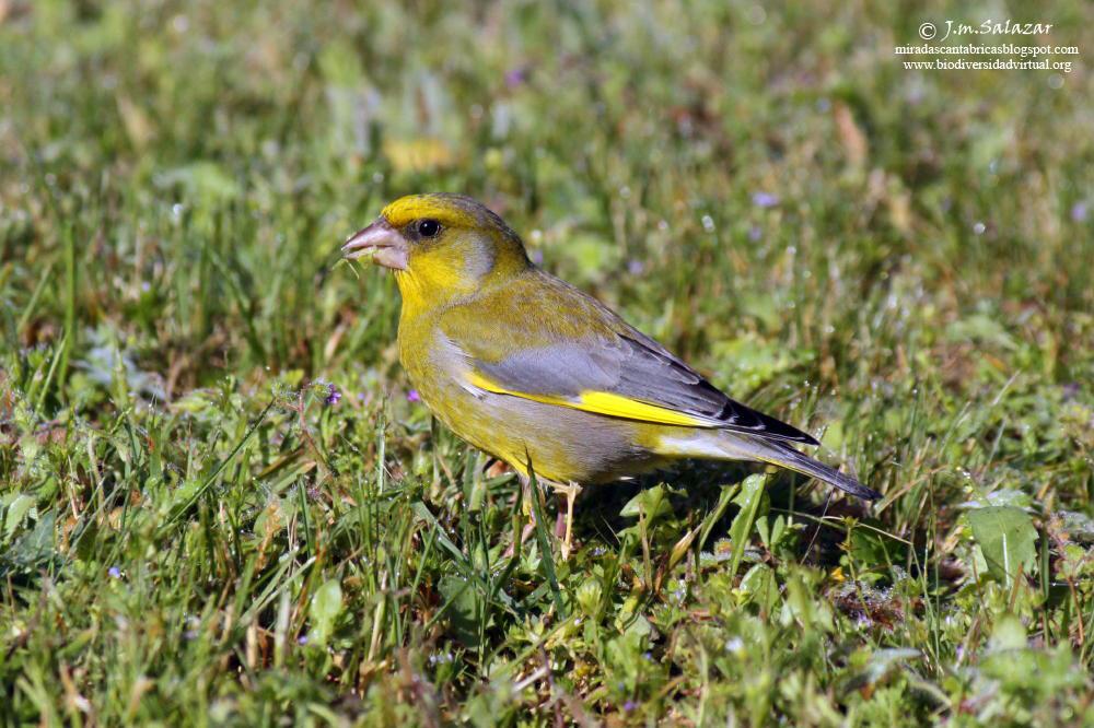 Miradas cant bricas aves del jard n del valle de losa iii for Aves de jardin
