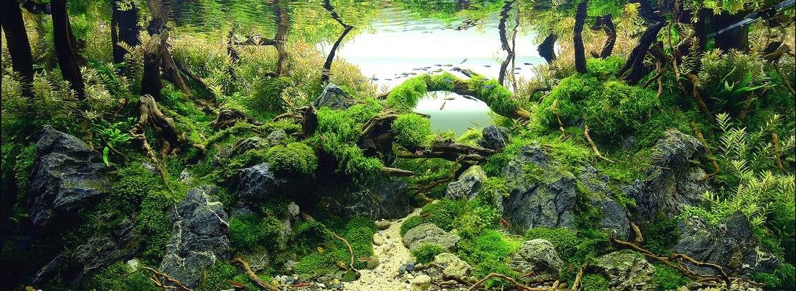 aquascaping adalah kerajinan mengatur tanaman air serta batu cavework ...