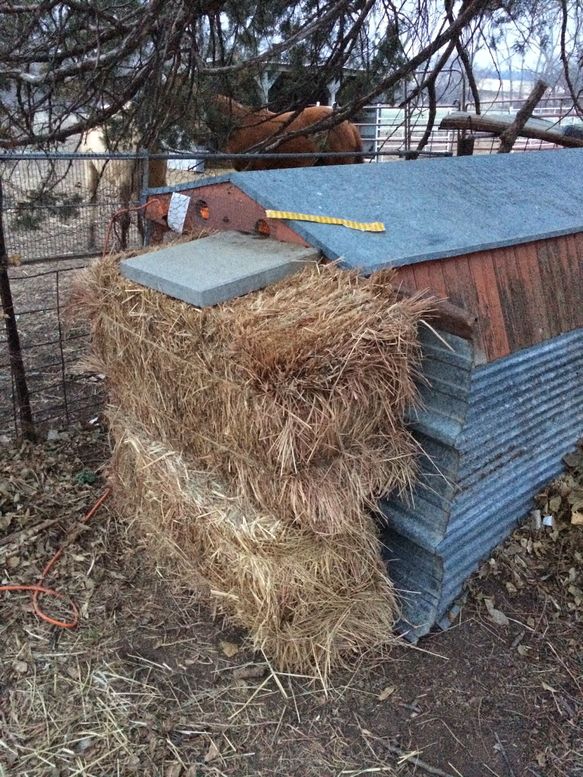 Our chicken coop which I hope is impenetrable