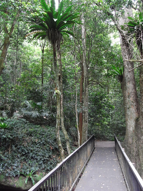 Minnamurra Rainforest walk