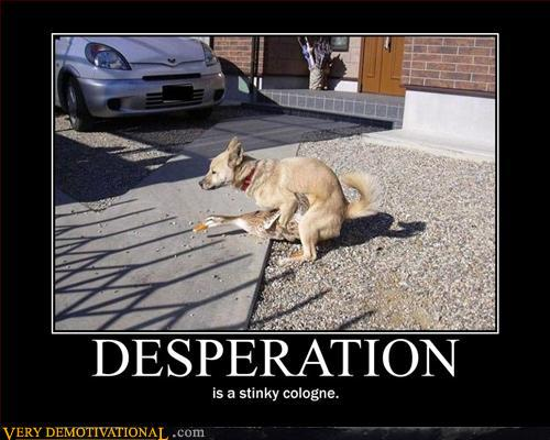 Top 10 Funny Demotivational Posters Feauring Animals