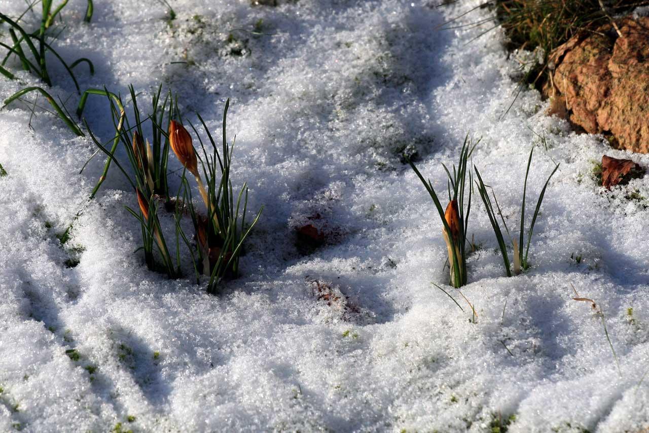 nepeta cataria gedanken aus dem katzengarten dem frost trotzen. Black Bedroom Furniture Sets. Home Design Ideas