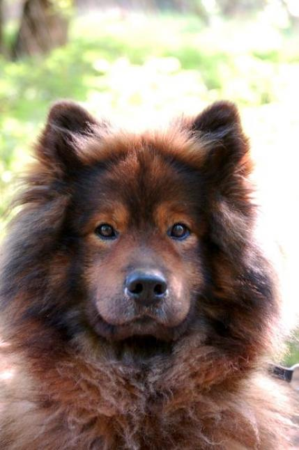 Small European Dog Breeds