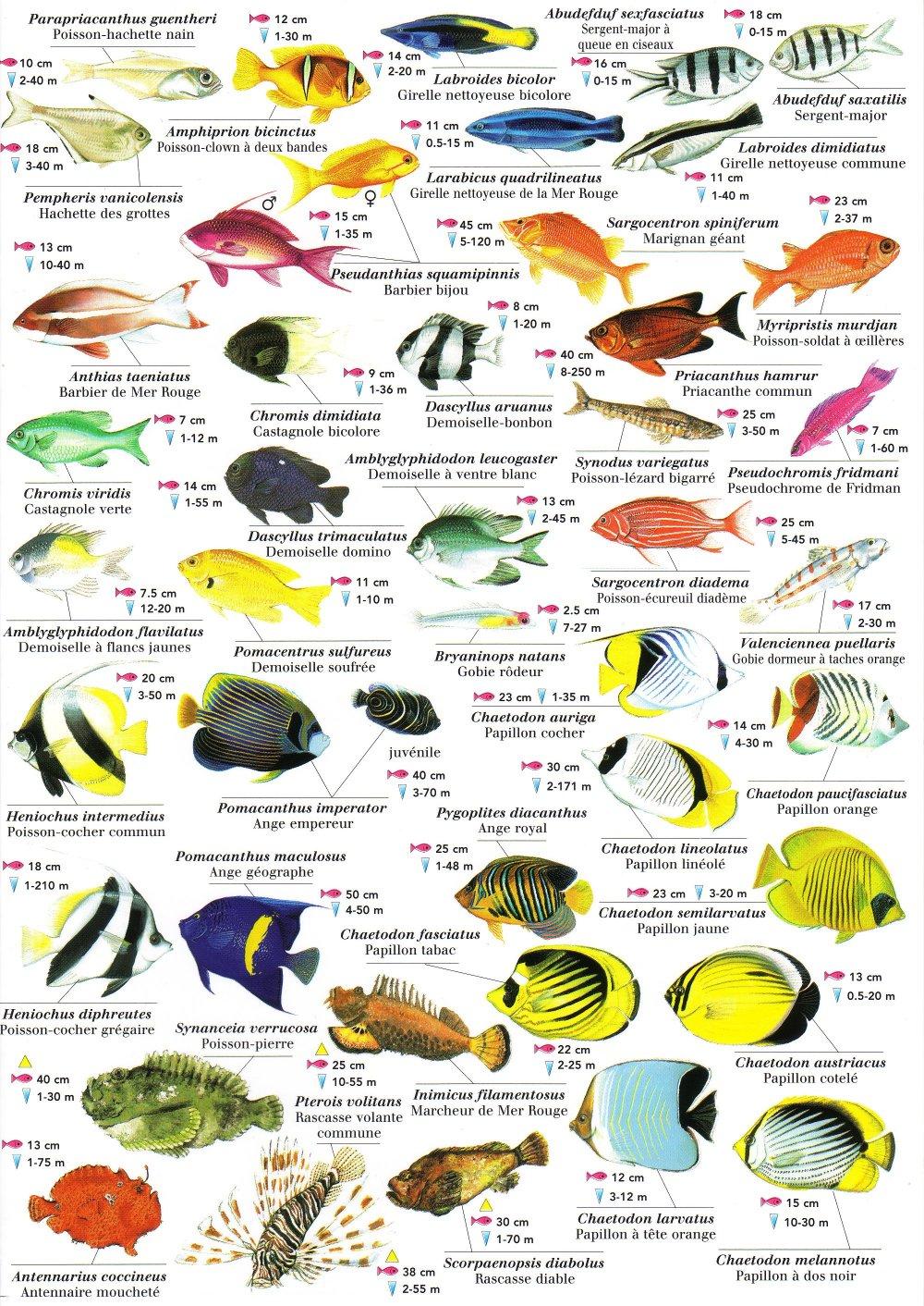 Vente poissons eau douce trouvez le meilleur prix sur for Vente poisson rouge toulouse