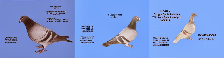 Moje gołębie
