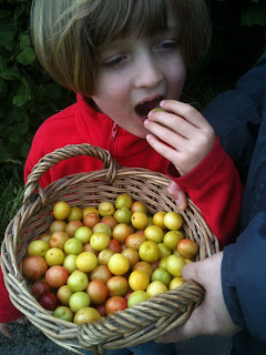 Bulice and cherry plums, how kids learn to forage