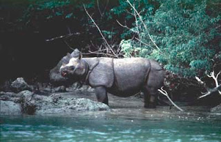 Ujung Kulon National Park, Java Rhino, Rhinoceros, West Java