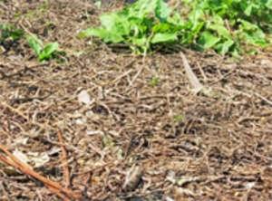 Garden Soil Versus Midwest Weather