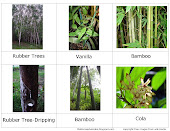 Rainforest Plants-3 Part Cards