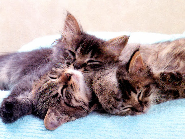 три котёнка спят друг на друге