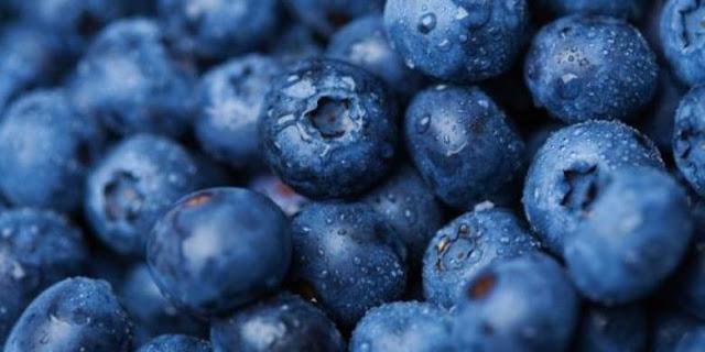 Manfaat Blueberry bagi kesehatan otak