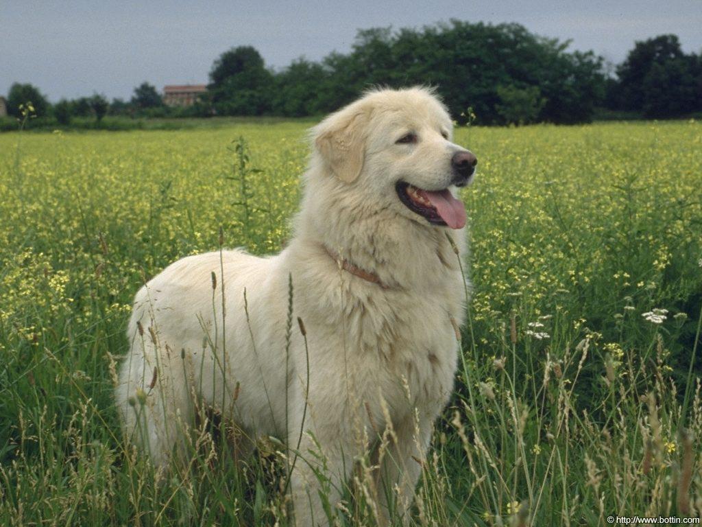 http://4.bp.blogspot.com/-GUy6mlWDZFs/TgxxJ9jyOdI/AAAAAAAAJ7U/okHnl_QUe0w/s1600/ws_White_Dog_1024x768.jpg