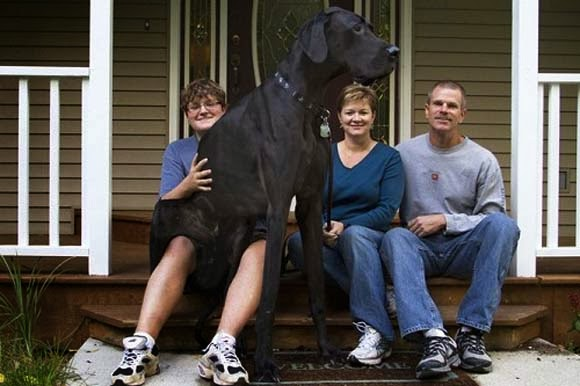 World Tallest Dog Pictures