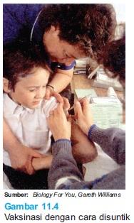 Vaksinasi antibodi dengan cara disuntik