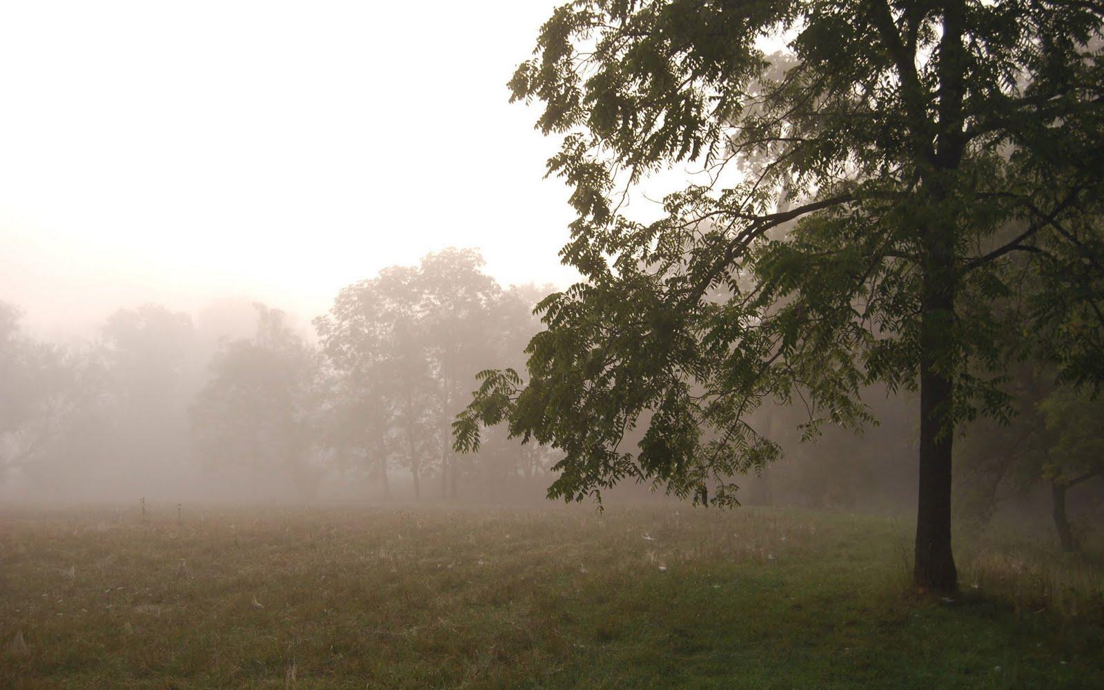 http://4.bp.blogspot.com/-GVkOUrq19BA/TeaFMr71tBI/AAAAAAAAAaY/GpYyZlMZPq4/s1600/Sunrise-in-the-Trees-Wallpaper-1920x1200.jpg