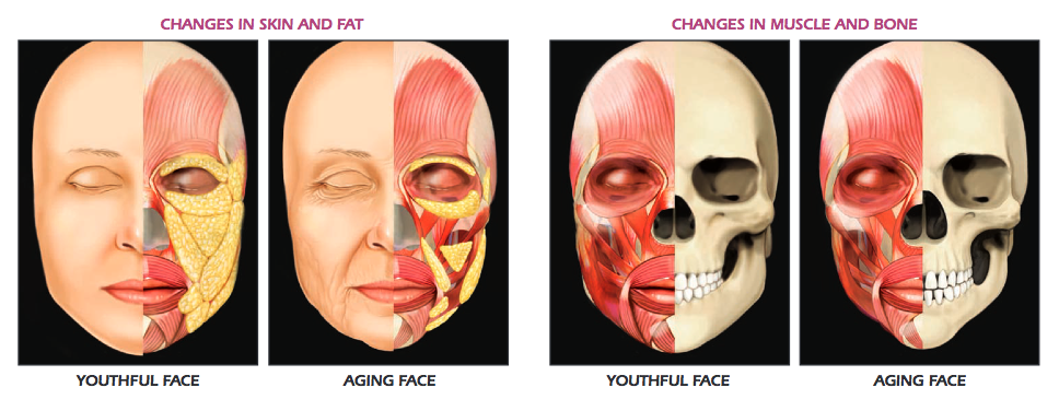 Skin, fat, muscle and bone changes with age
