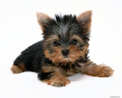 Де купити собаку / Где купить собаку / Where to buy a dog