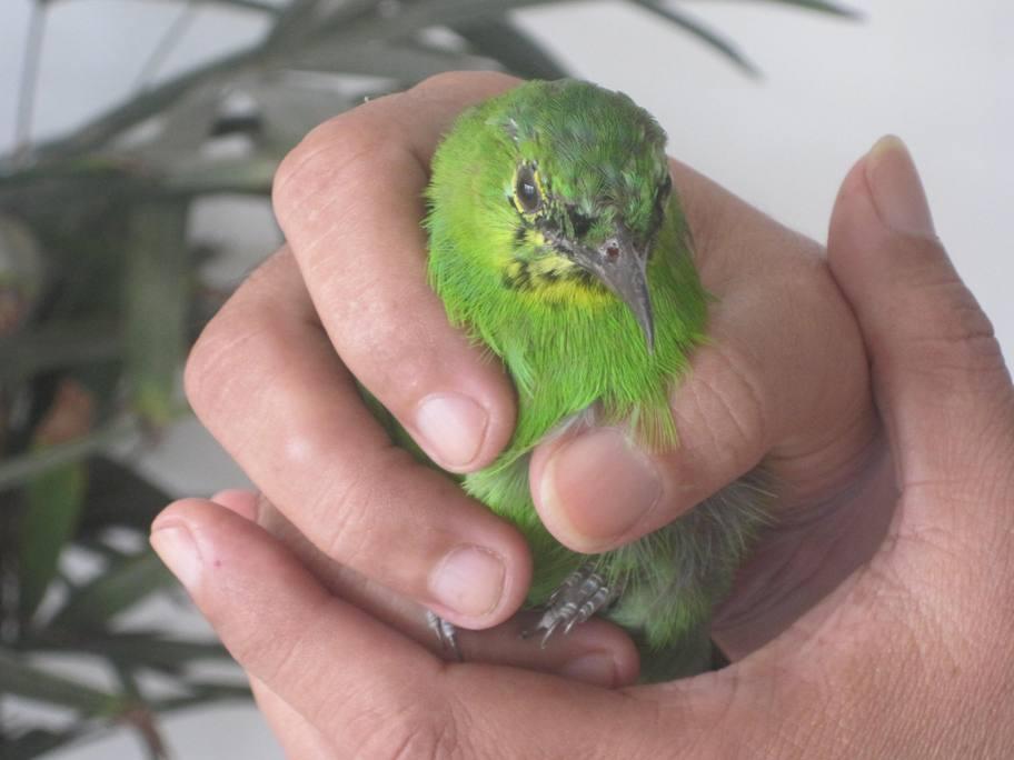 being thirty burung kecil yang malang