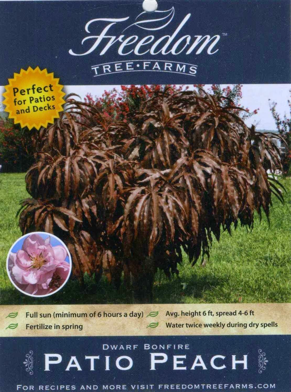 100 florida peach orlando plants and trees buy banana