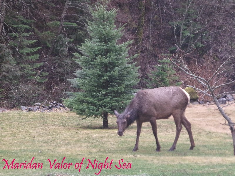 Elk grazing in the rain by Maridan Valor. See more like it on the blog Night Sea 90.