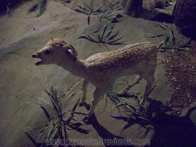stuffed deer at Zoobic Safari