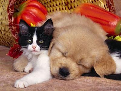Perrito y Gatito en la amistad de cachorros