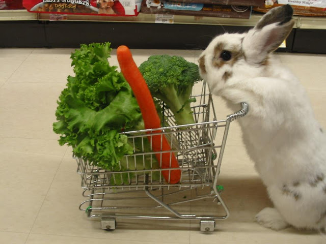 funny animal pictures, bunny shopping