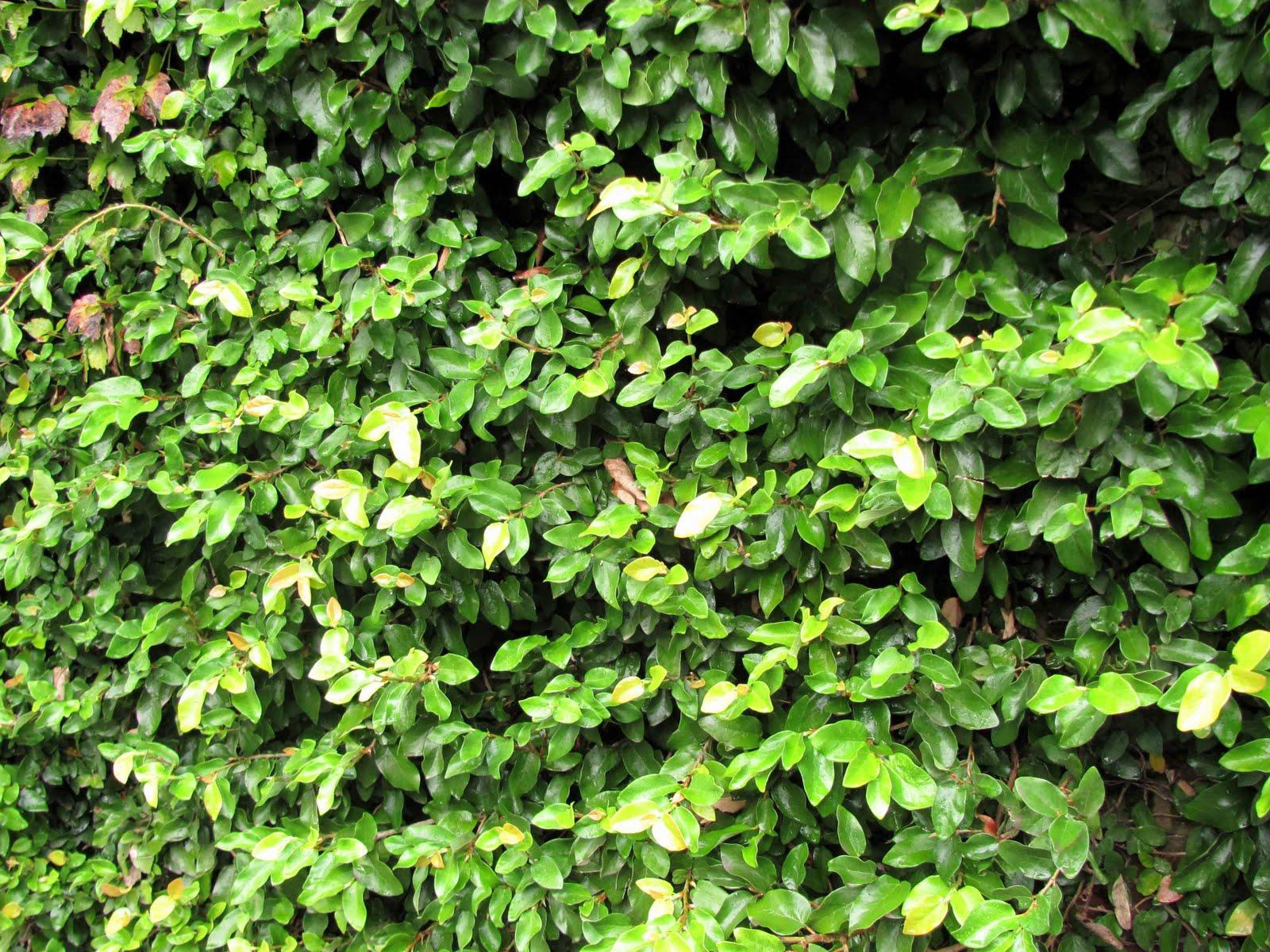 En el jardin enamorarse del muro y algo m s - Plantas trepadoras para muros ...