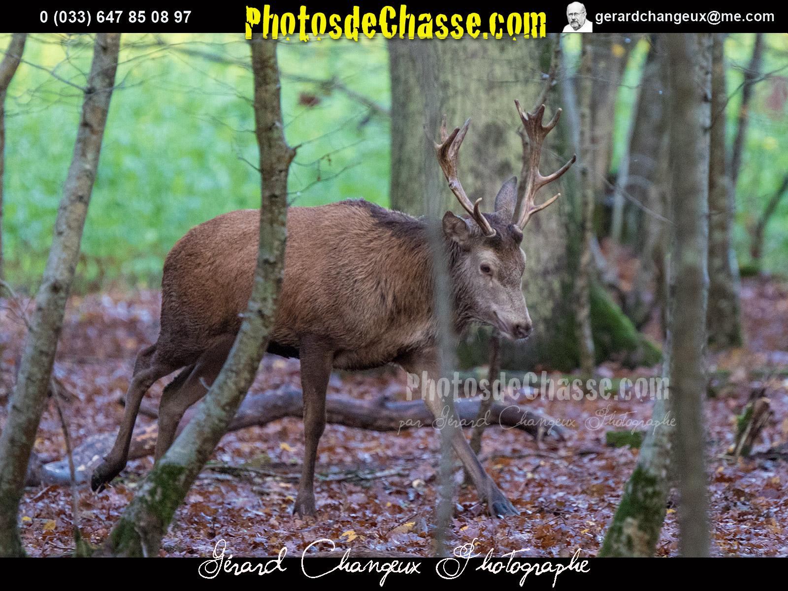 rencontre dans yonne red deer
