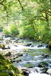 Shannon Hager Photography, Portland Oregon, Wahclella Falls Hike