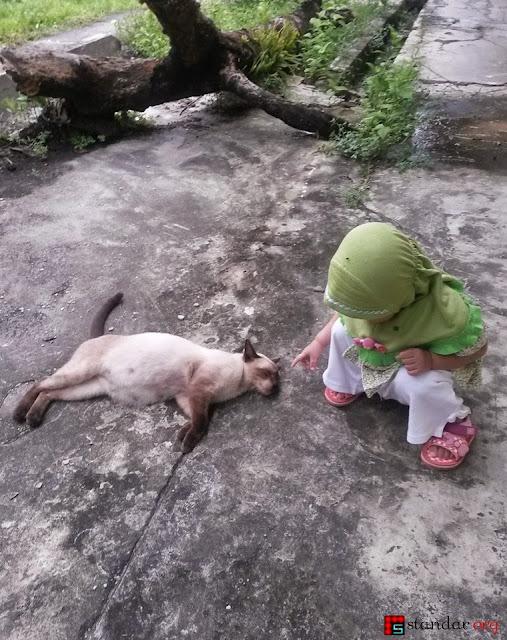 """Kelahiran si Pupus, Kucing """"Persia"""" yang Kesasar-3"""