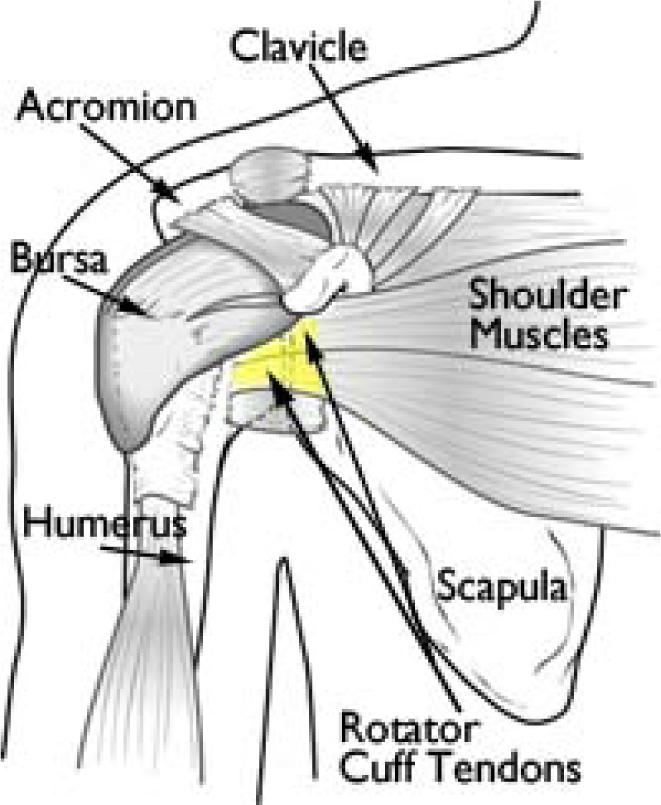 Shouldercrepitus Types Of Crepitus