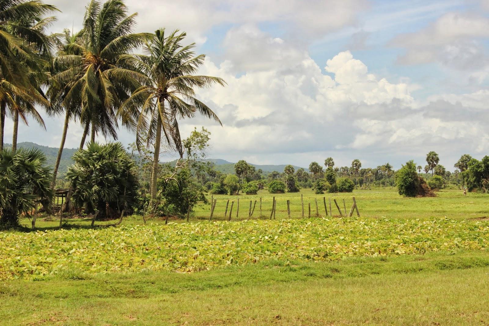 Dándole la vuelta al mundo: Día 237. Kampot y Kep: de hamacas ...