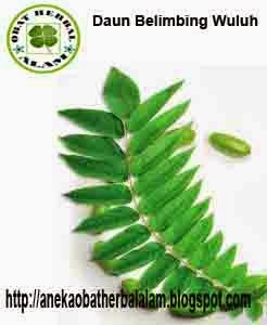 manfaat, khasiat, daun belimbing wuluh