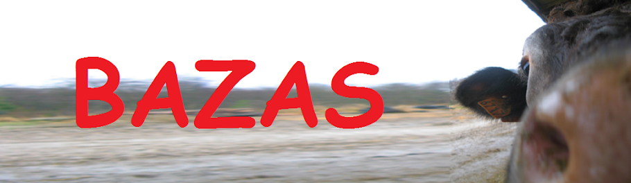 Bazadais un jour, Bazadais pour toujours