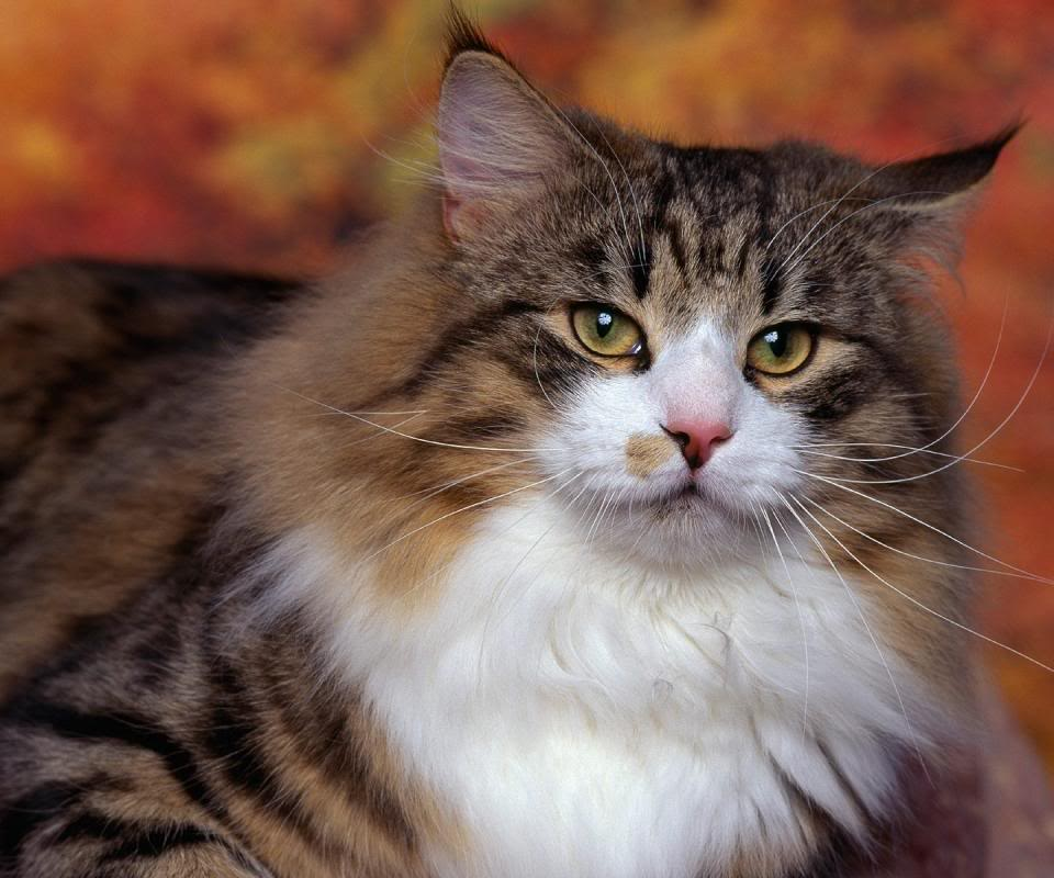 Cat: Cat Picture And Information