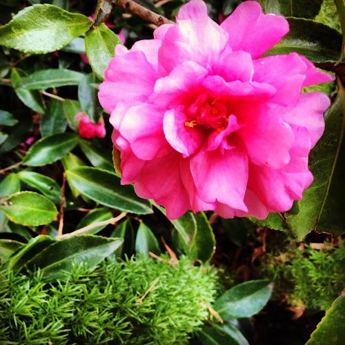 NowThisLife.com - camellia blossom