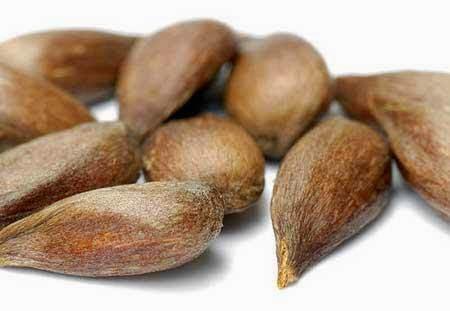 semilla manzana cura cancer